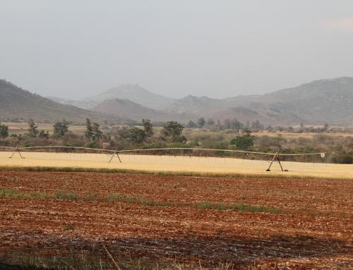 La grande promessa dell'agricoltura africana